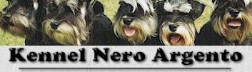Visit Nero Argento's Miniature Schnauzers at www.nero-argento.dk!
